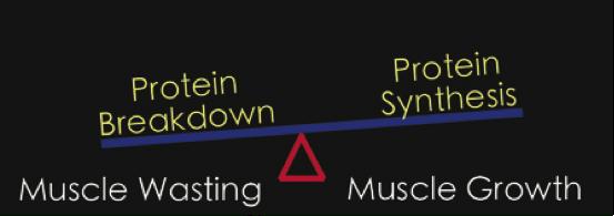 Maksimoi lihaskasvu proteiinilla